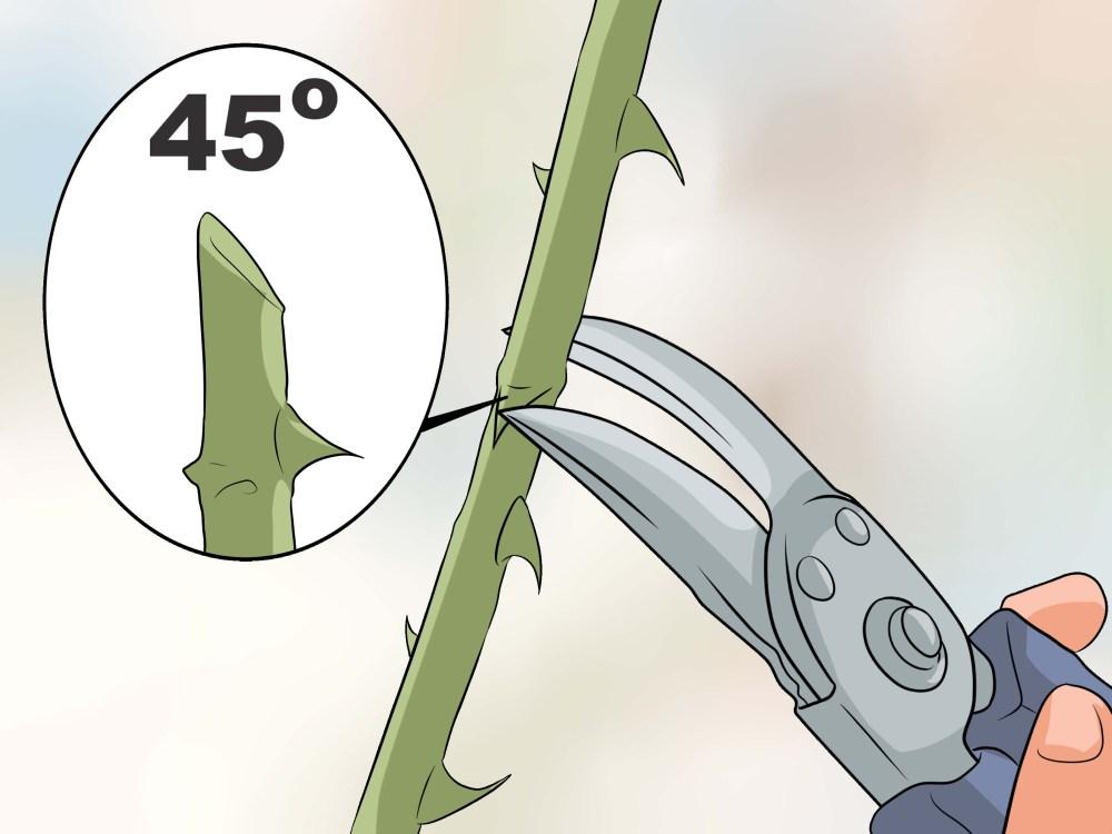 medium resolution of rose leaf diagram
