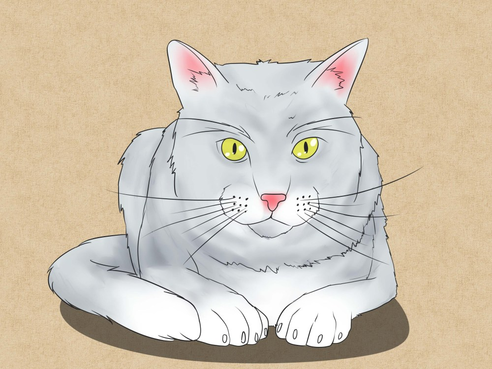 medium resolution of how to draw a cat