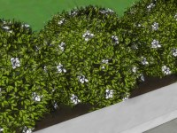 How to Grow a Hedge Fence: 12 Steps (with Pictures) - wikiHow