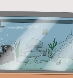 how to set up a healthy goldfish aquarium [ 3200 x 2400 Pixel ]