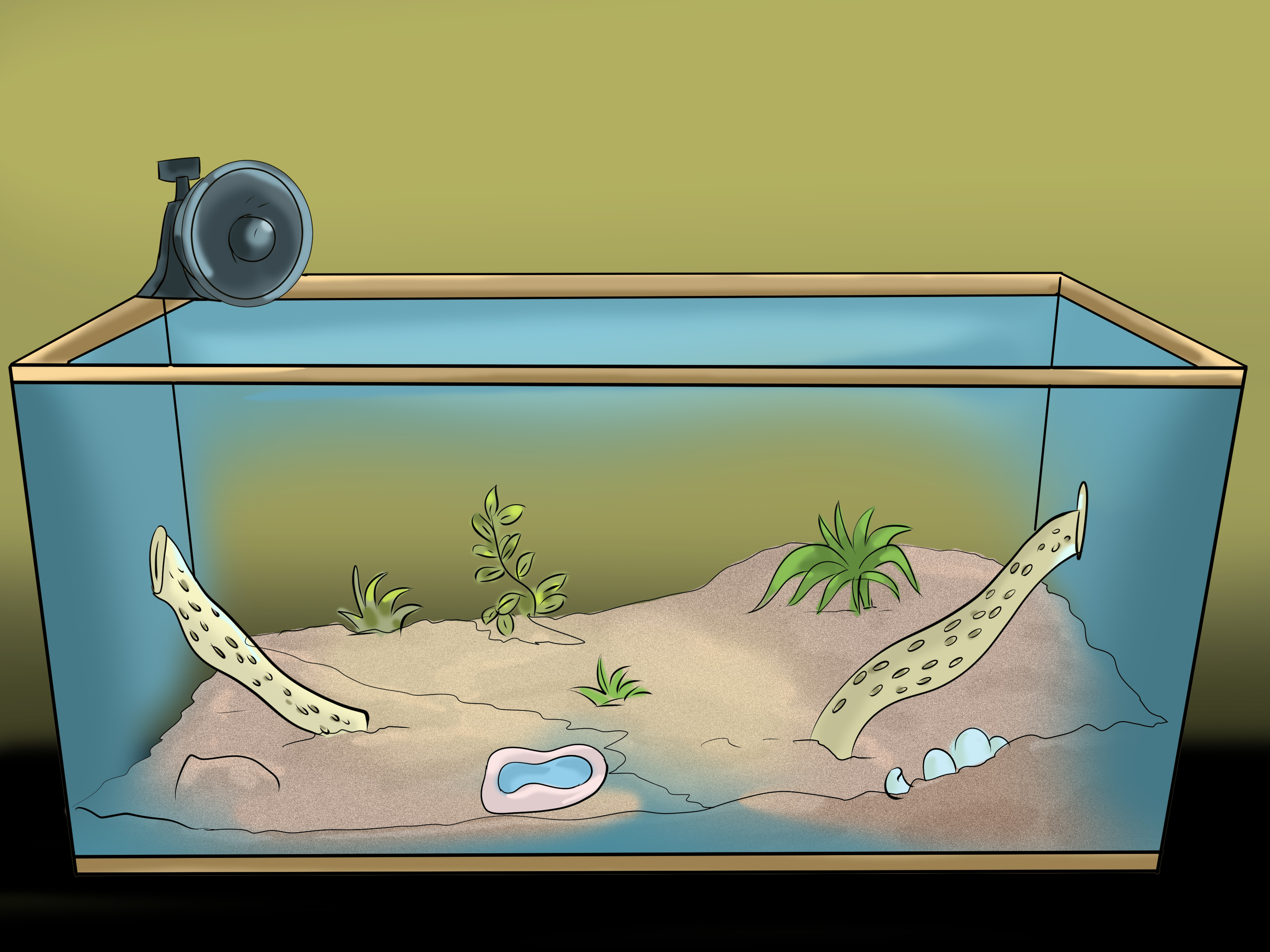 How To Create A Hermit Crab Habitat 9 Steps With Pictures