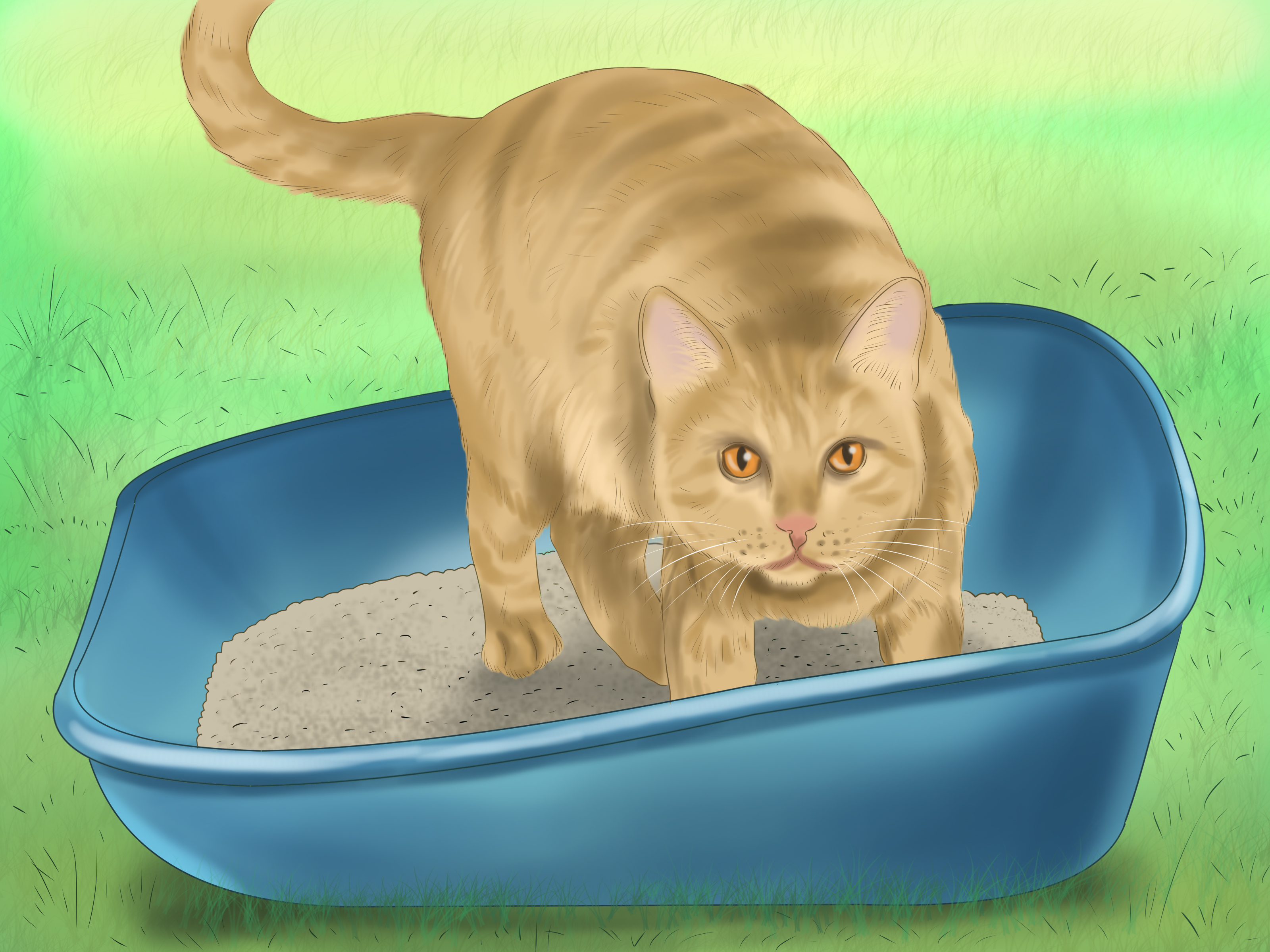 How To Get A Litter Trained Cat To Quotgoquot Outside 11 Steps