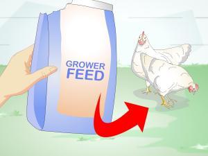 [WRG2586] Feed