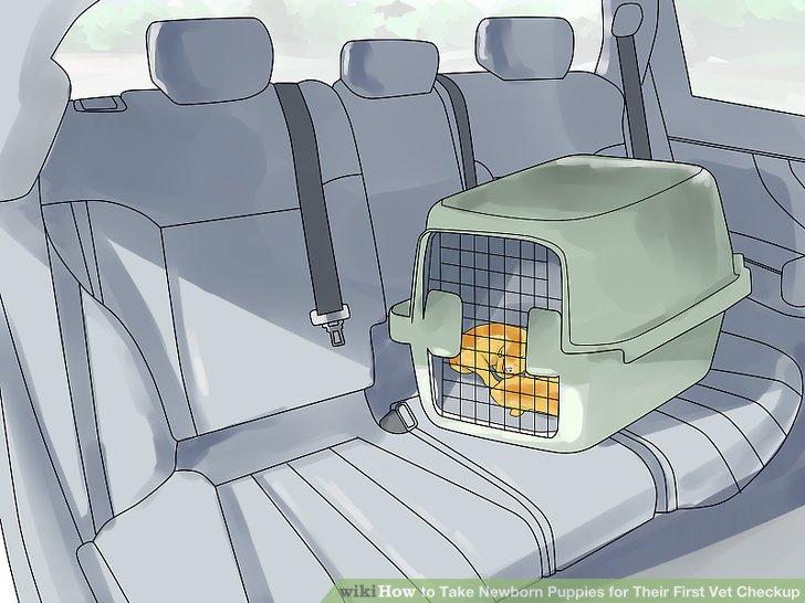 Transportieren Sie die Welpen zum Tierarzt.