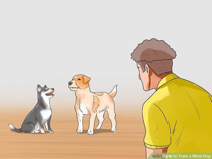 Beobachten Sie andere Tiere in Ihrem Haushalt um Ihren blinden Hund.