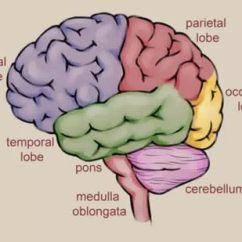 Brain Diagram Pons 2005 Suzuki Eiger Wiring 3 Ways To Draw A Wikihow Method 2 Anatomically Accurate Version