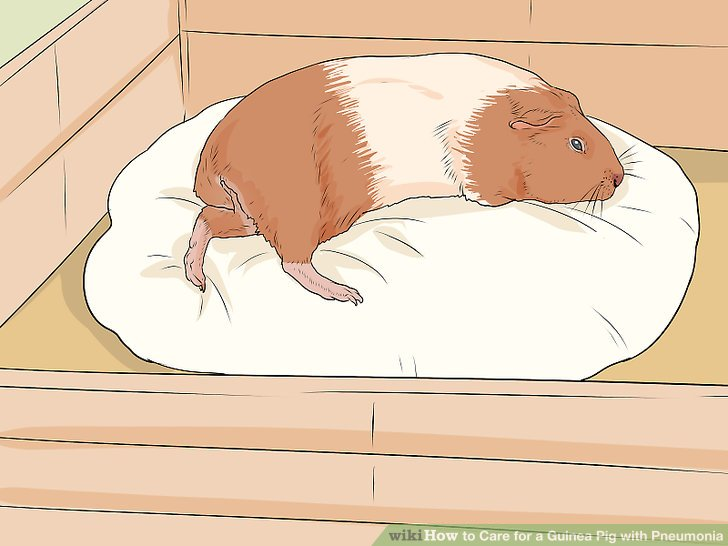 Isolate your guinea pig.