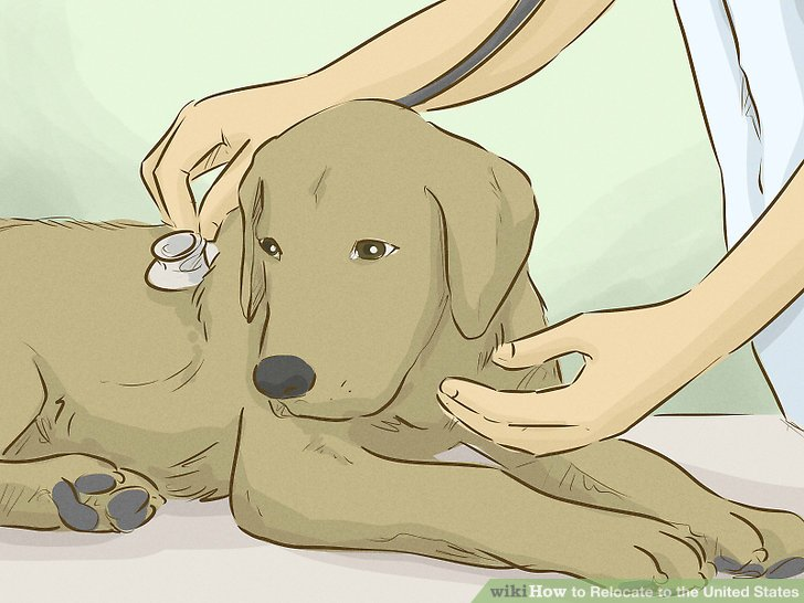Have your pet vaccinated.