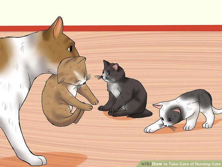 Lassen Sie die Mutter die Kätzchen bewegen.