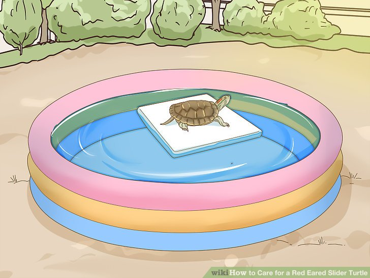 Take your turtle outside sometimes for direct sun.