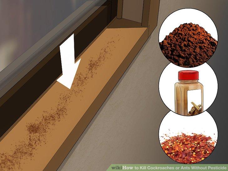 Place natural repellants near all entrances.