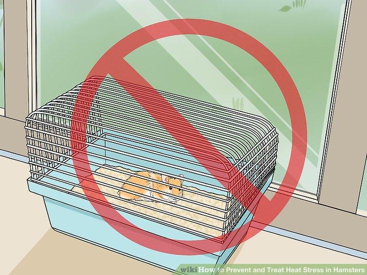 Platzieren Sie Ihren Hamsterkäfig nicht in der Nähe von Fenstern.