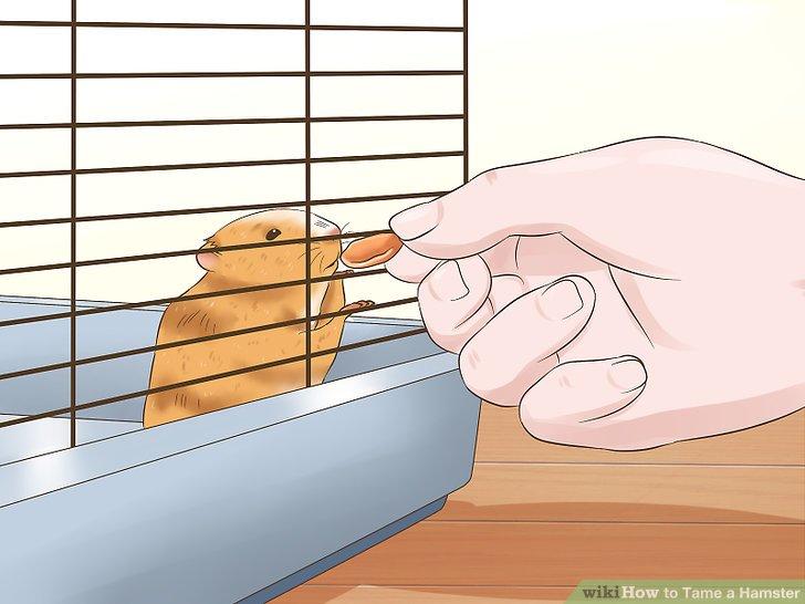 Gib deinem Hamster etwas Gutes.