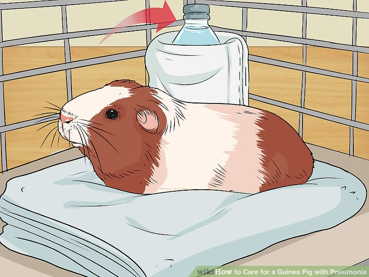 Keep your guinea pig warm!