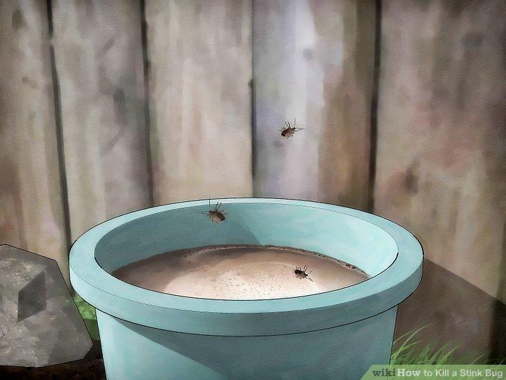 Knock the stink bug into the jar.