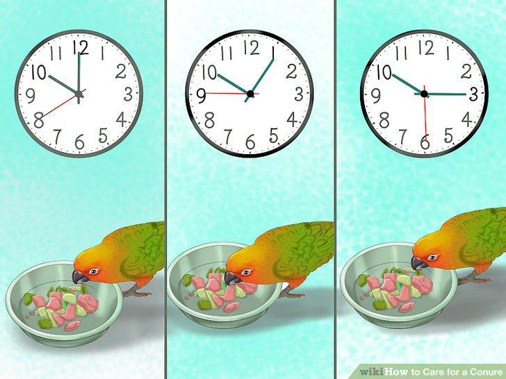Entwickeln Sie einen Fütterungsplan für Ihre Conure.