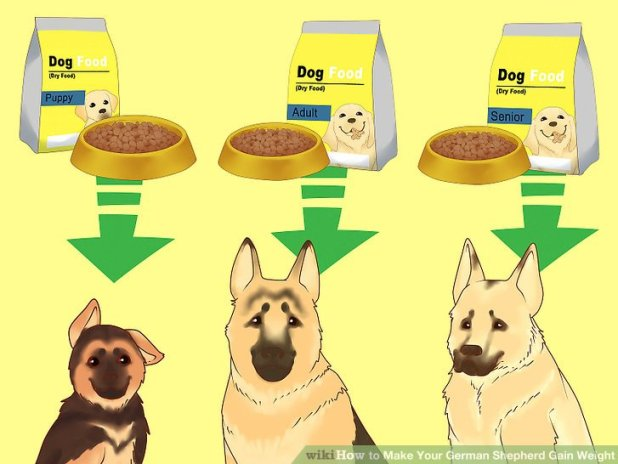 How To Make A Skinny Dog Gain Weight