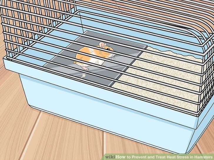 Legen Sie eine gekühlte Keramik- oder Marmorfliese in den Käfig.