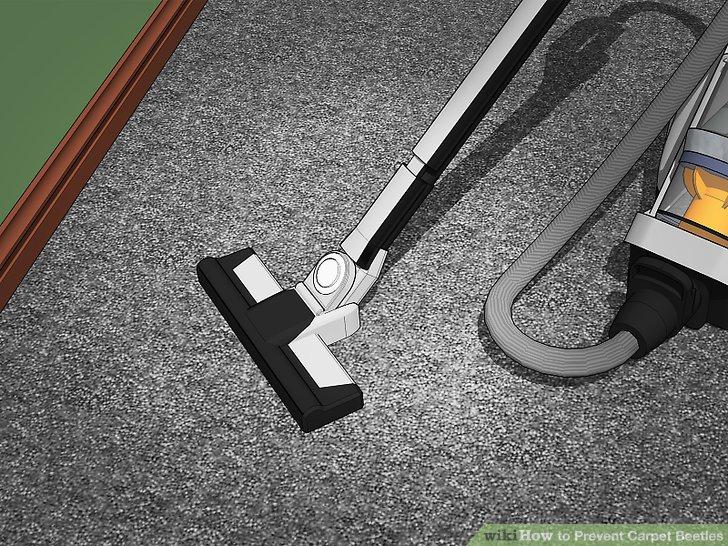 Saugen und dämpfen Sie die Teppiche regelmäßig.
