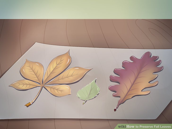 Dip each leaf into the melted wax.