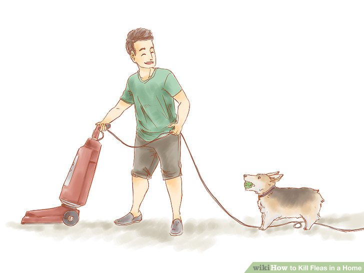 Vacuum your house twice daily for 2 weeks.