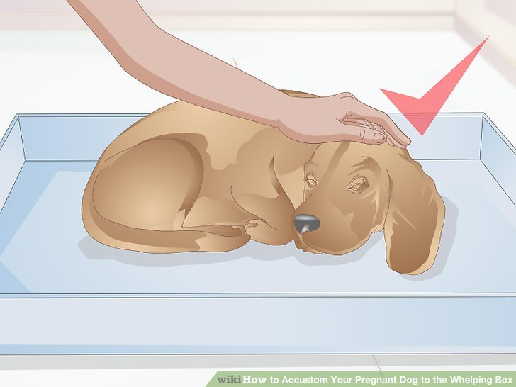 Köpeğinizi kutuda uyumaya teşvik edin.