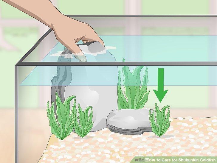 Dekorieren Sie Ihren Tank mit künstlichen Pflanzen und glatten Steinen.
