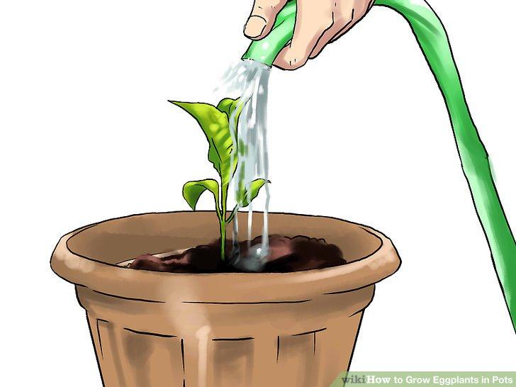 Bewässere den Boden.