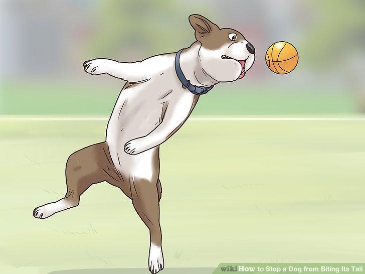 Reduzieren Sie den Stress Ihres Hundes.