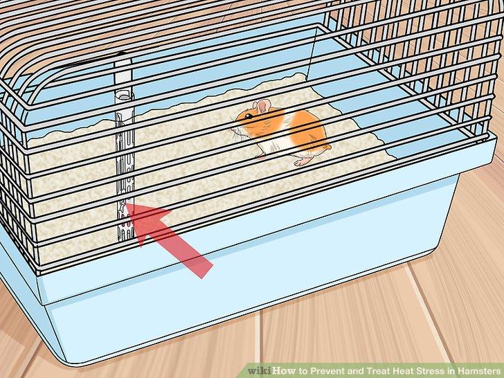 Bewahren Sie ein Thermometer in der Nähe des Käfigs auf.