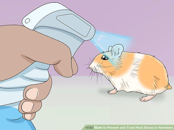 Besprühen Sie den Hamster mit Wasser.