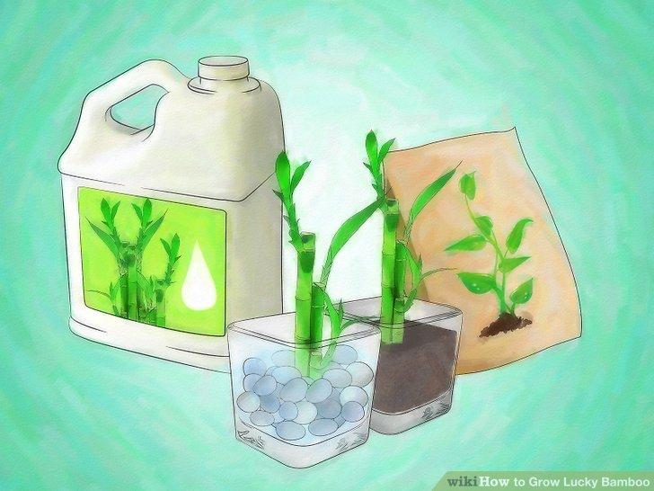 Düngen Sie Ihre Pflanze jeden Monat oder so.