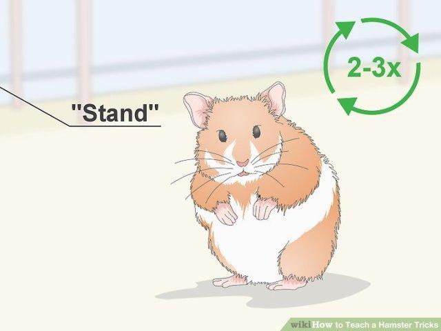 Teach a Hamster Tricks Step 5 Version 2.jpg