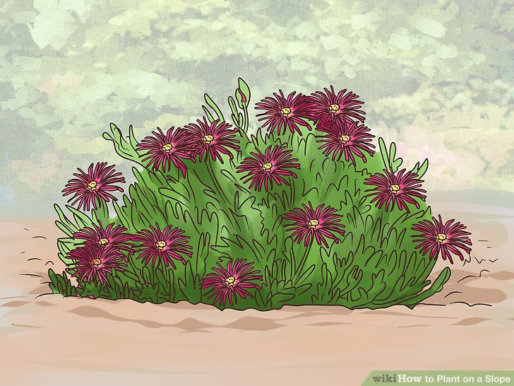 Pick plants with clumping roots.