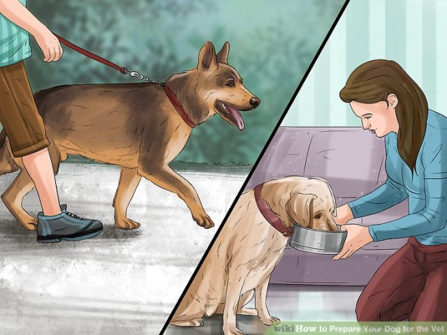 Prepare Your Dog for the Vet Step 11 Version 2.jpg