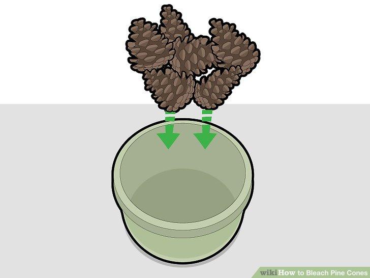 Put the pine cones in your bucket.