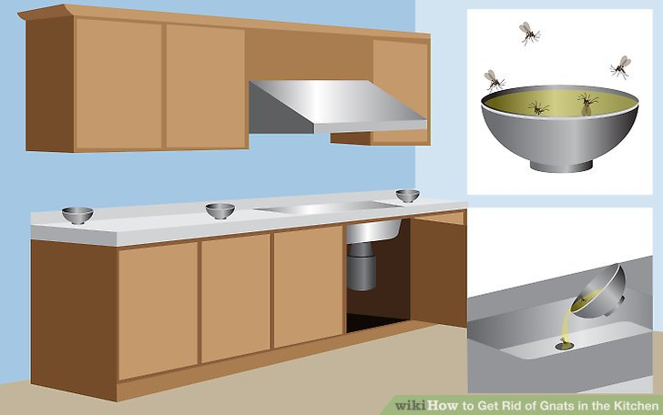 Gnats In Kitchen