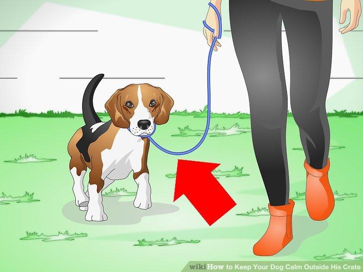 Trainieren Sie Ihren Hund an der Leine.