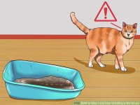 How to Stop a Cat from Urinating in the House: 14 Steps