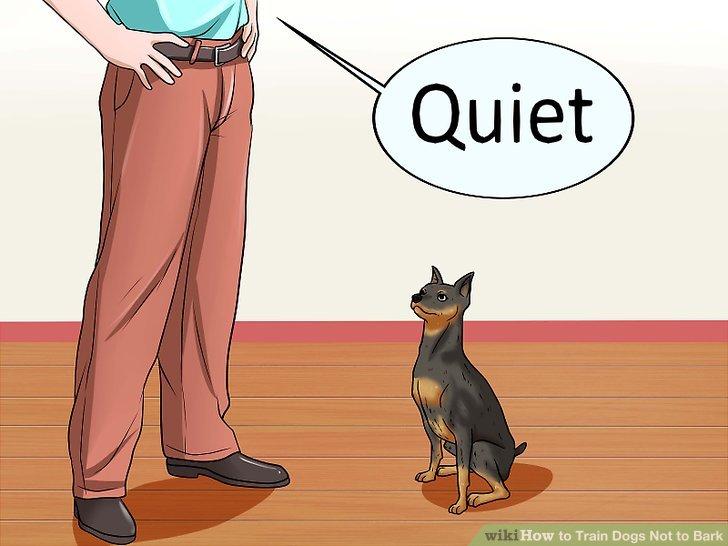 """Bringen Sie Ihrem Hund bei, auf einen """"ruhigen"""" Befehl zu antworten."""