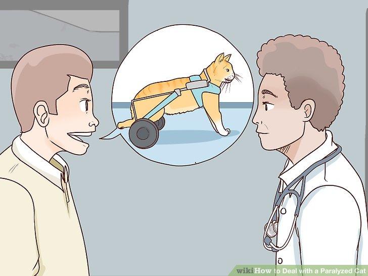 Sprechen Sie mit Ihrem Tierarzt, um einen Rollstuhl oder ein anderes Mobilitätsgerät für Ihre Katze zu bekommen.