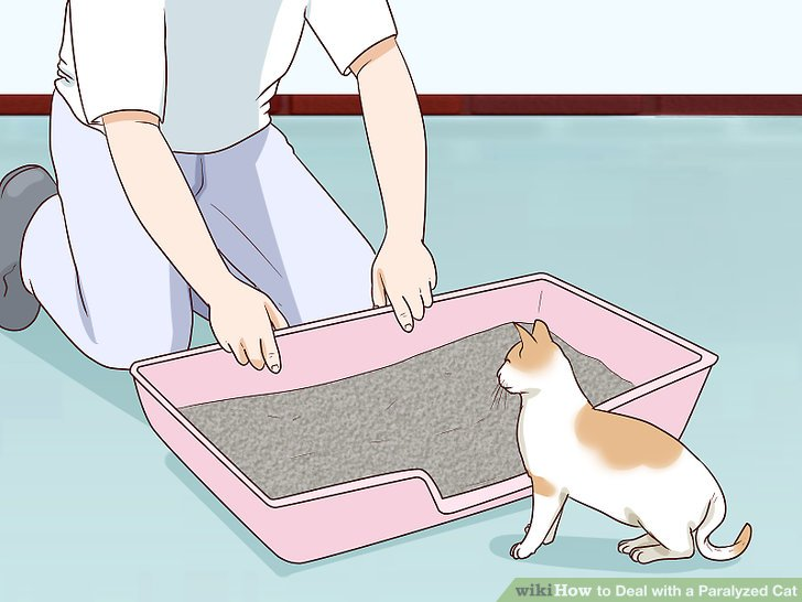 Helfen Sie Ihrer Katze bei Bedarf, die Katzentoilette zu verwenden.