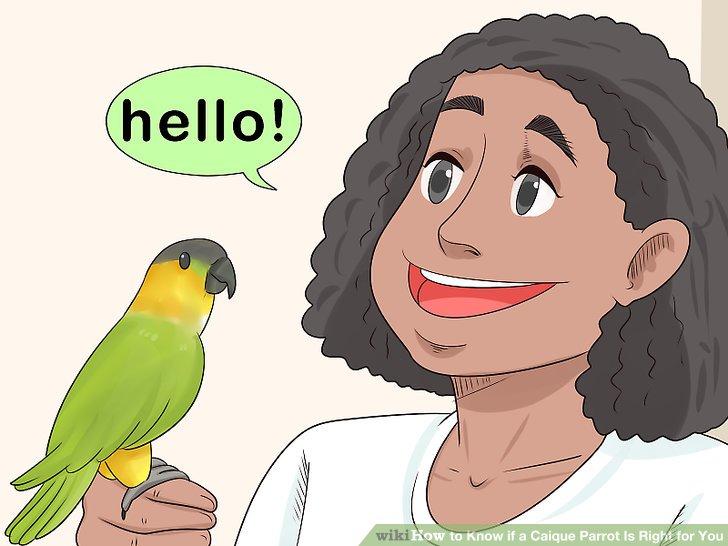 Wählen Sie einen Caique, wenn Sie ihnen Wörter beibringen möchten.