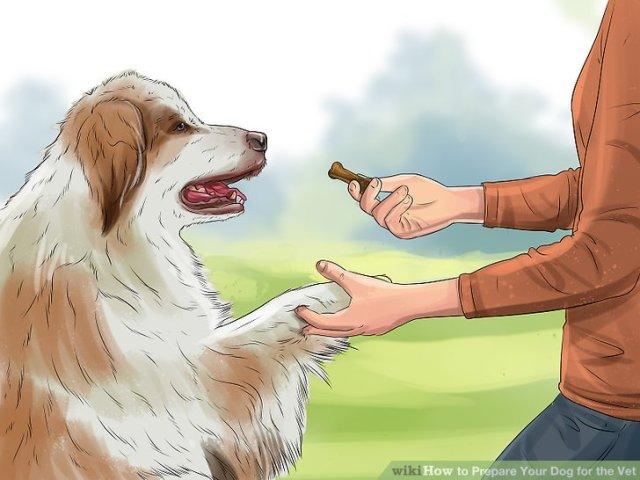 Prepare Your Dog for the Vet Step 2 Version 2.jpg