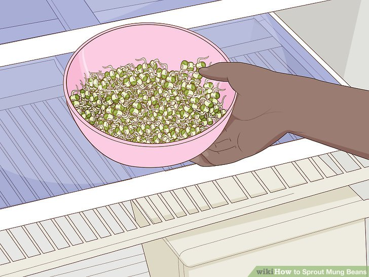 Place the sprouts into a bowl and store in the fridge for up to 2 weeks.