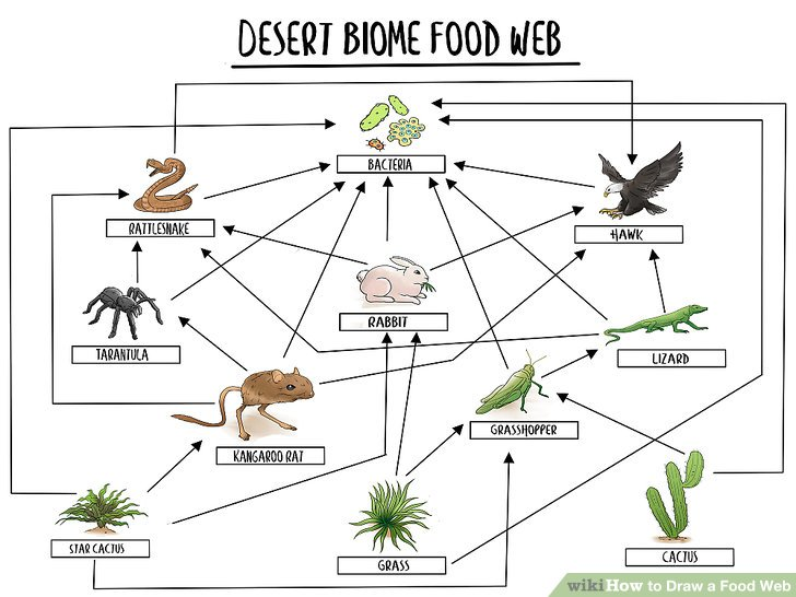 savanna animal food chain diagram solenoid wiring how to draw a web 11 steps with pictures wikihow image titled visual sample