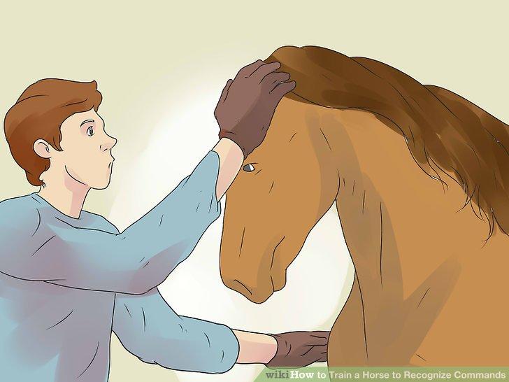 Beginnen Sie mit einfachen physischen Befehlen wie der Körpersprache und dem Berühren des Pferdes.