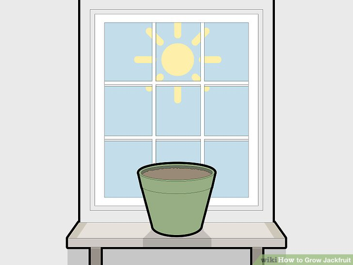 Keep the potted seeds in a warm and sunny environment.