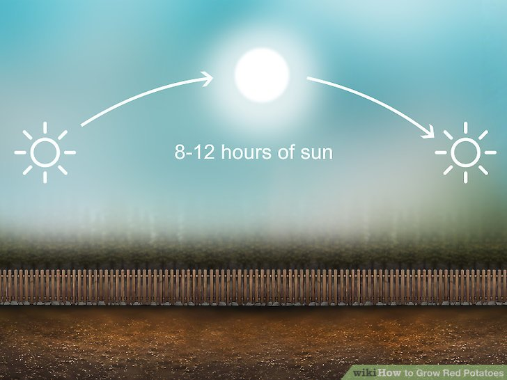 Pick a spot in your garden that receives full sunlight for most of the day.