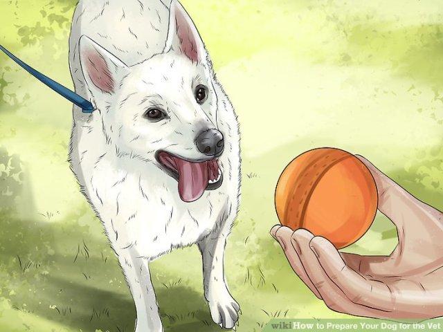 Prepare Your Dog for the Vet Step 12 Version 2.jpg